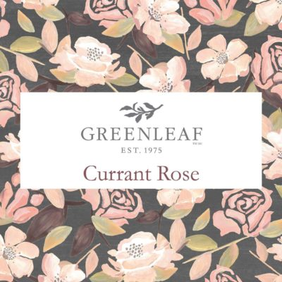 Nieuw! Greenleaf Currant Rose